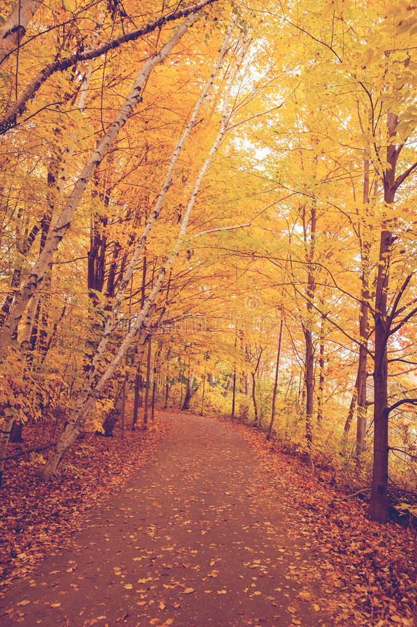 Woods. Autumn color, path with colourful autumn leaves royalty free stock photography
