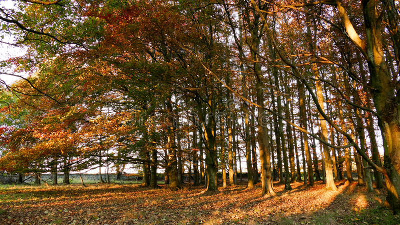 Woods during autumn stock image