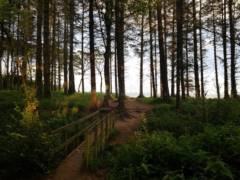 Woods courtown wexford ireland royalty free stock photo