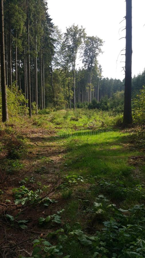 The woods stock photography