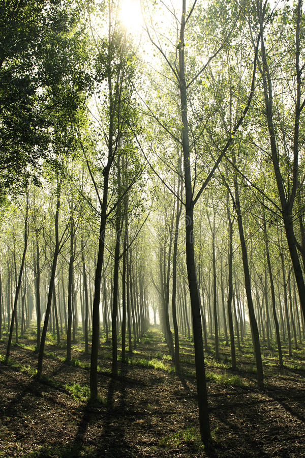 Download Woods with haze stock photo. Image of atmosphere, italy - 27336646