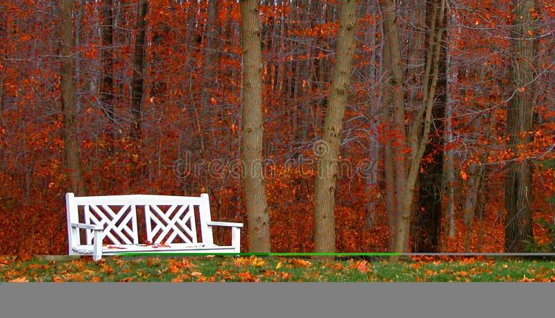 Woods Kanapy Zdjęcia Royalty Free