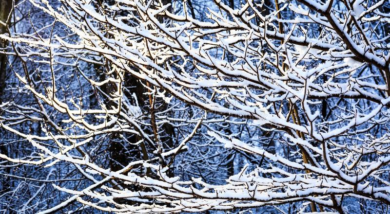 Decorative winter design with trees full of snow. Woods nature landscape in the winter day. Snow covered trees in Canada. Decorative winter design with trees stock photos