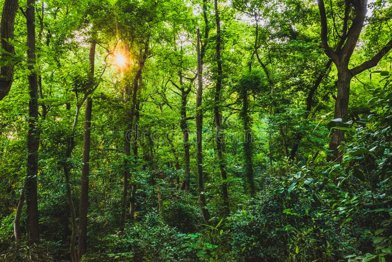 Woods nel parco vicino al West Lake, Hangzhou, Cina fotografia stock