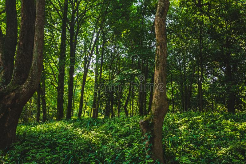 Woods in park near West Lake, Hangzhou, China royalty free stock photo