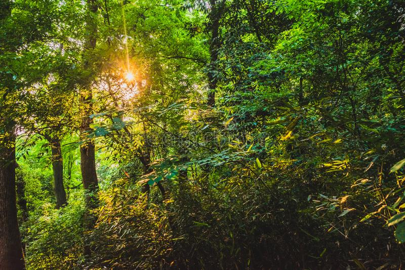 Woods in park near West Lake, Hangzhou, China. Woods in park near West Lake, in Hangzhou, China royalty free stock photography