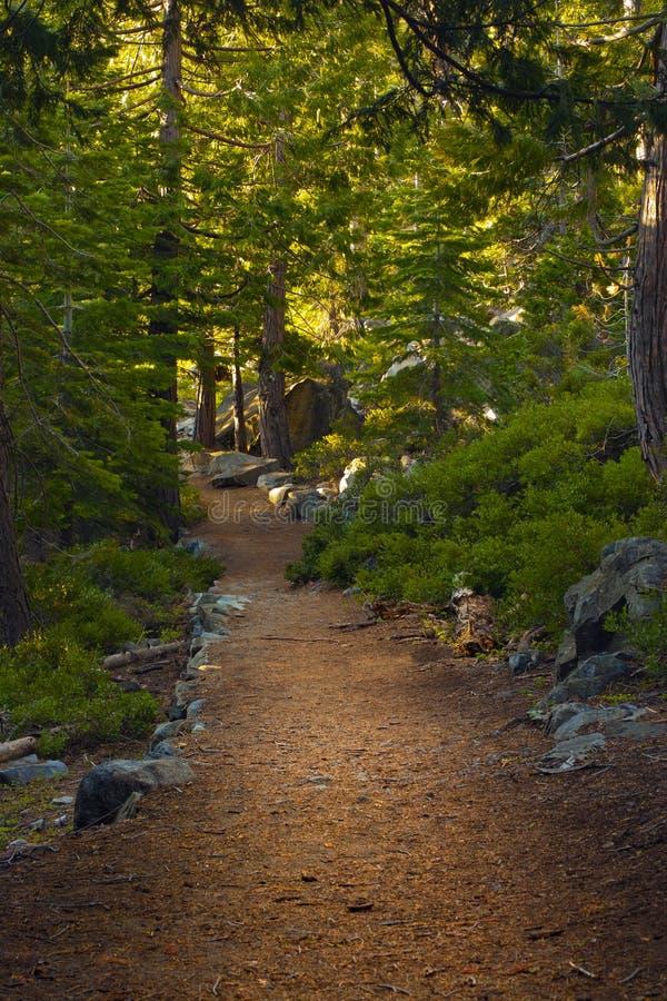 Woods Path stock photo