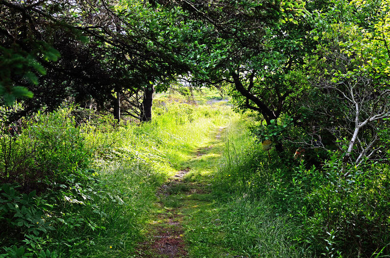 In the woods. The path in the woods on a sunny spring day royalty free stock image