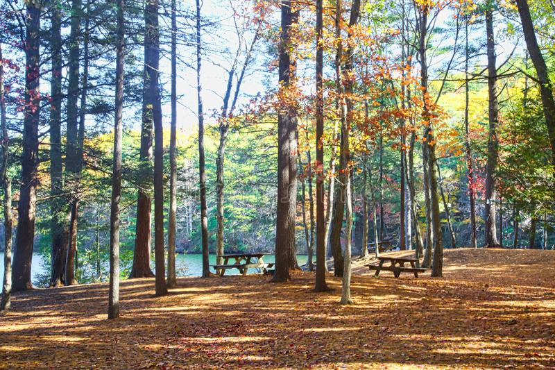 Woods picnic are autumn colors. Tall trees with autumn colored leaves surround lake and picnic area in woods of Connecticut stock photo