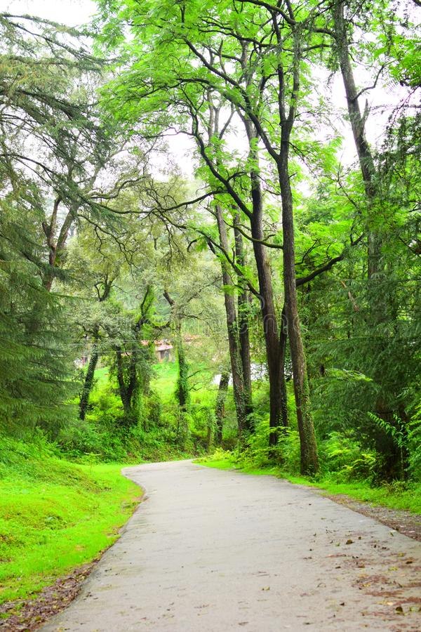 Into the Woods. This picture is of my Travel to Ranikhet, Uttrakhand. WhereI just stopped by to click this picture, because the colours around me were very fresh royalty free stock photography