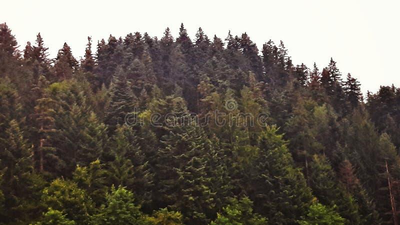 The woods stock photo