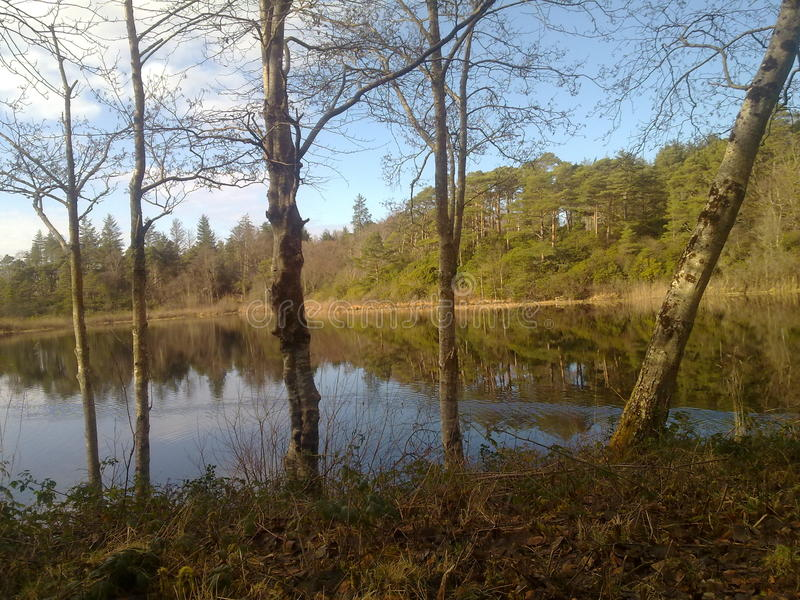 Woods reflection royalty free stock images