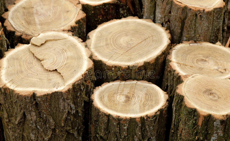 Download Woods after sawing stock photo. Image of fine, lumber - 22508418