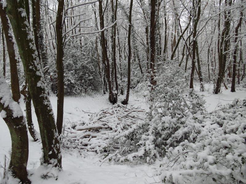 Snow fall royalty free stock image