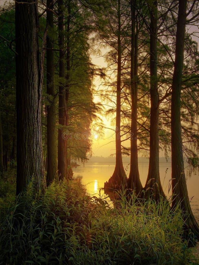 Woods sunrise stock photos