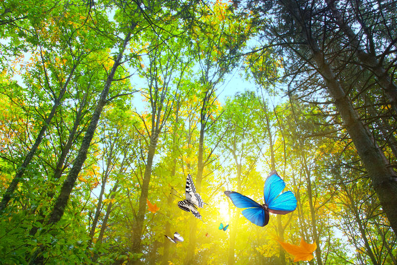 Woods sunshine. Bright sunshine in a woods royalty free stock photo