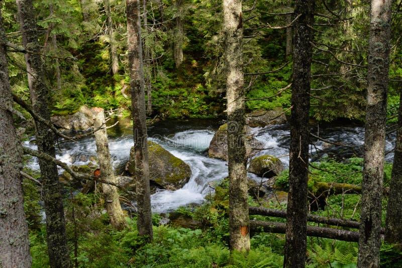 Woods at Tatra National Park stock images