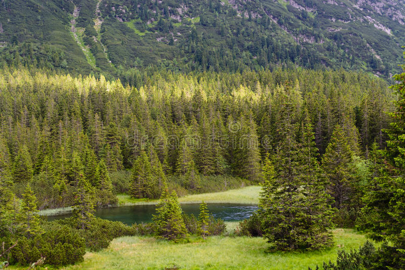Woods at Tatra National Park royalty free stock images
