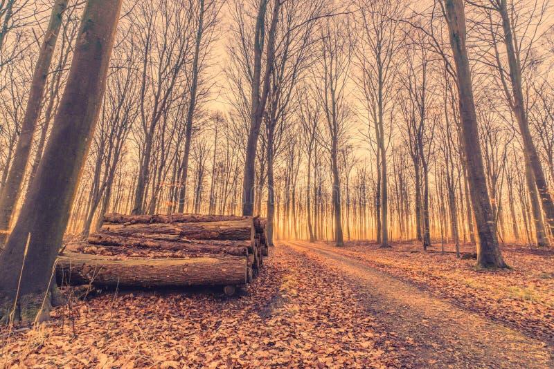 Woodstack en una salida del sol del bosque imagen de archivo