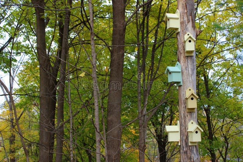 Woodsy beeld van oude doorstane die boom in heldere en kleurrijke vogelhuizen wordt behandeld stock afbeeldingen
