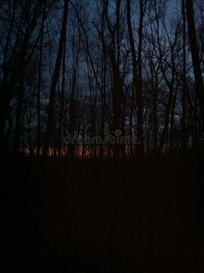 Woodsy sunrise stock image