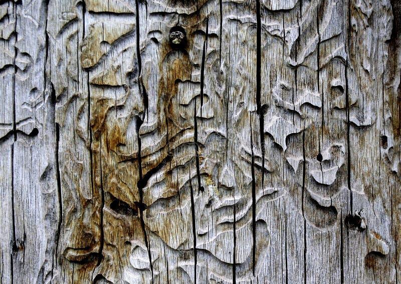 Woodworm fotos de archivo libres de regalías