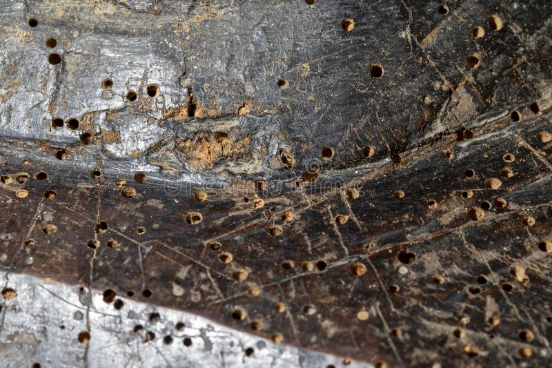 Woodworm holes in old furniture. Closeup shot of woodworm holes in an old piece of furniture royalty free stock photos
