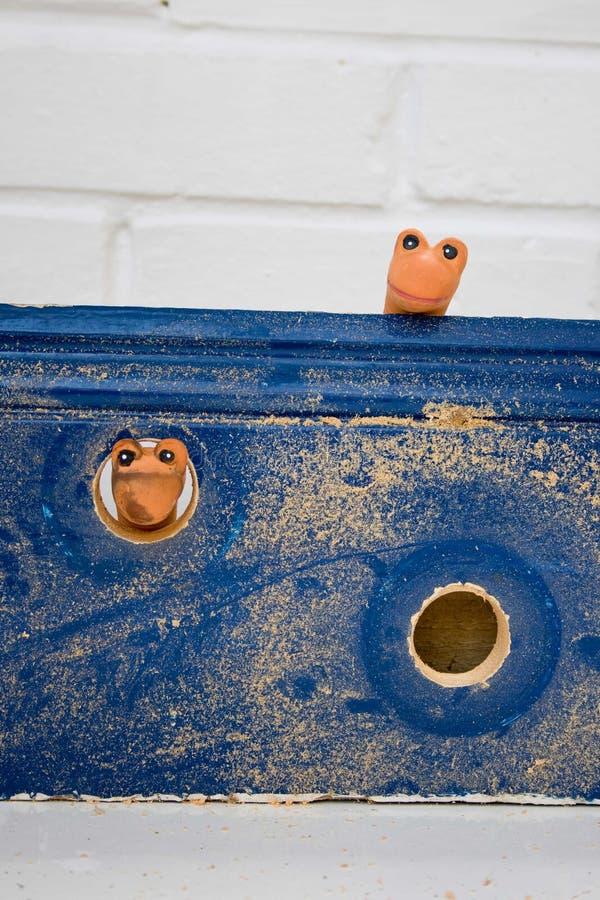 Woodworms fotos de archivo libres de regalías