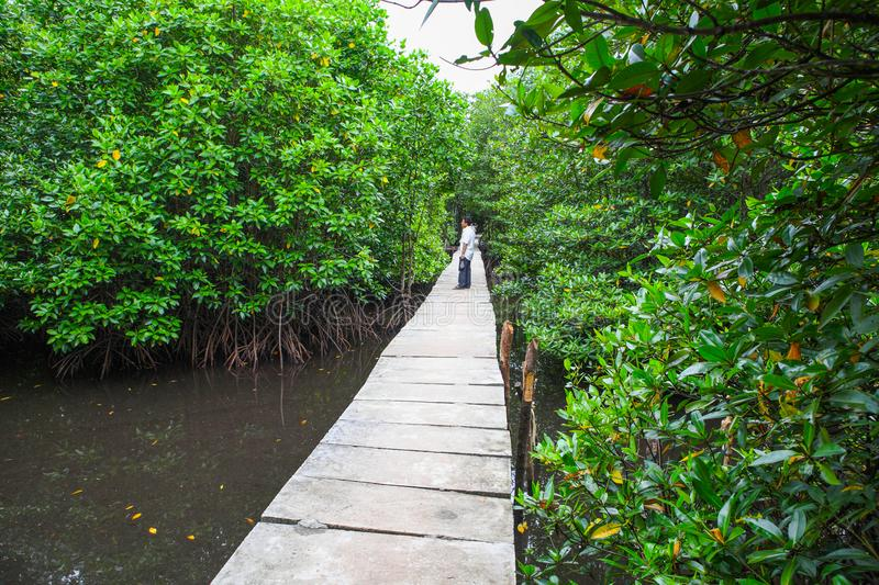 Mangrove Forests in koh kong Province Cambodia stock images