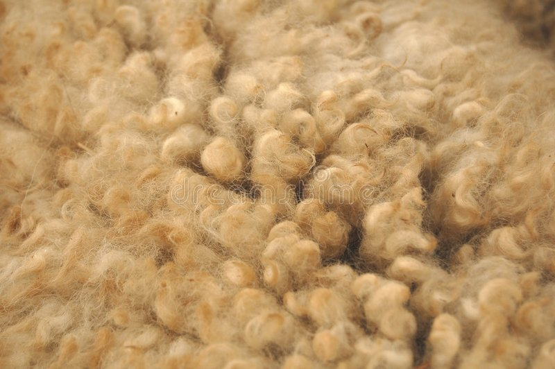 Wool. A close-up image of sheep wool stock photo