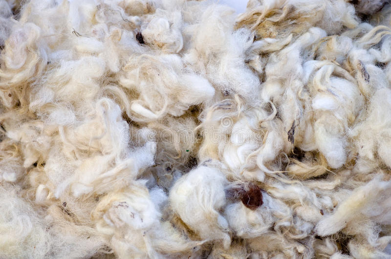 Wool. Close-up shot of wool royalty free stock photos