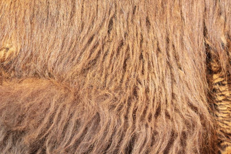 Wool on a camel as an abstract background stock photos