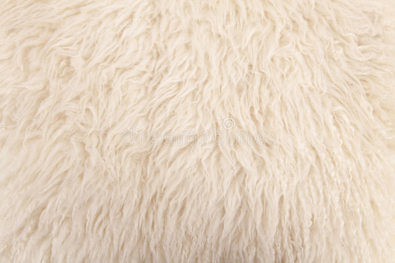 Wool sheep closeup royalty free stock photography