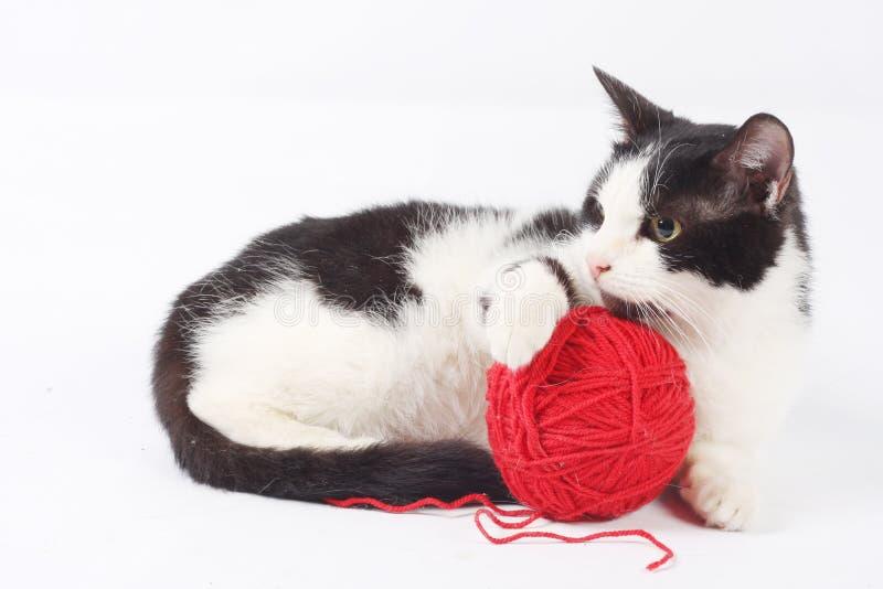 woolen bollkatt fotografering för bildbyråer