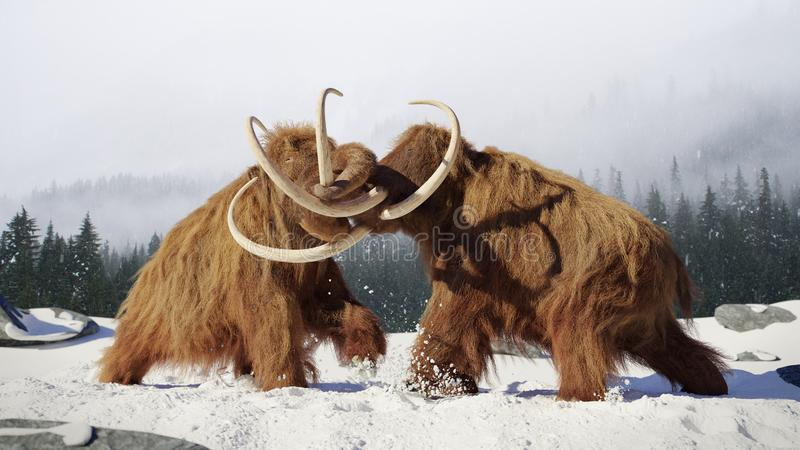 Woolly mammoth bulls fighting, prehistoric ice age mammals in snow covered landscape. Huge extinct ice age animals, early elephant species in natural enviroment stock image