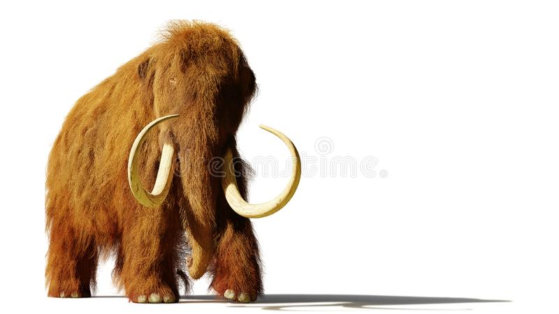Woolly mammoth, prehistoric mammal isolated with shadow on white background 3d rendering royalty free illustration