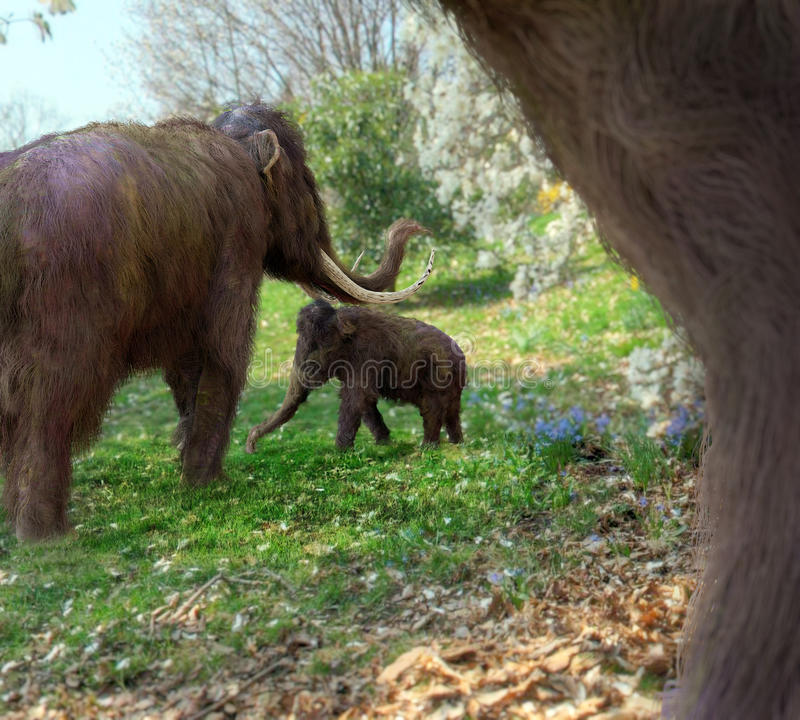 Free Woolly Mammoths In Meadow Royalty Free Stock Images - 61869249