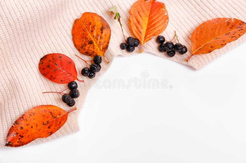 Woomen gentle beige pink sweater, dry autumn leaves and aronia berries on a white background, Autumn fall concept. Autumn composition. Woomen gentle beige pink royalty free stock photos