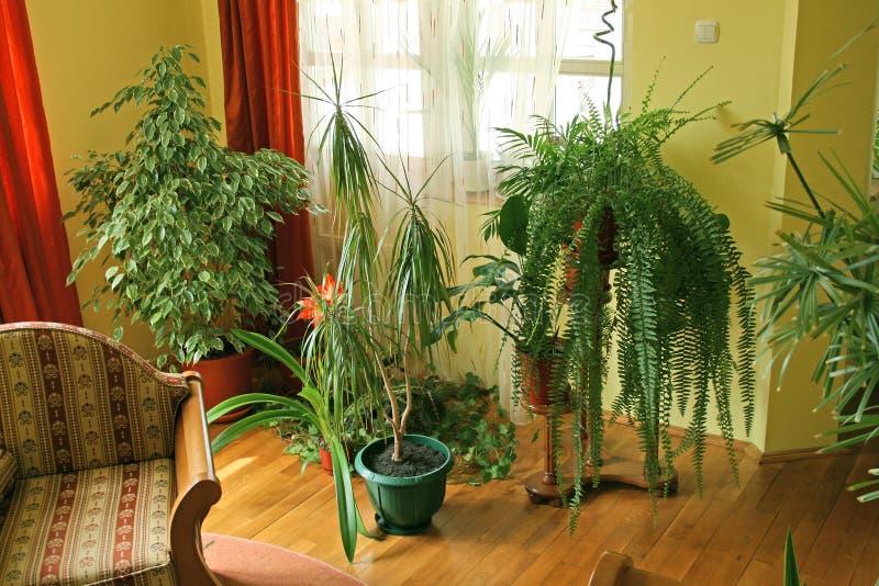 Woonkamer met groene installaties royalty-vrije stock foto's