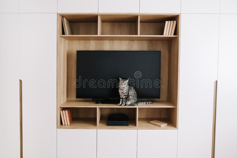 Woonkamerbinnenland met TV op een muur en een witte garderobe Het leuke kat binnen schieten Huis binnenlands ontwerp, Skandinavis royalty-vrije stock foto's