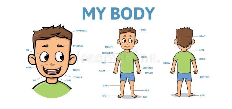 Woordenschat voor delen van mannelijk lichaam Het lichaam van de beeldverhaaljongen met beschrijving Vlakke vector horizontale il stock illustratie