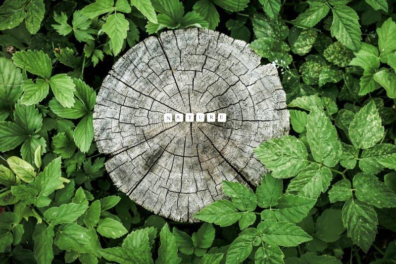 Word aard van houten parels op een boomstomp royalty-vrije stock foto's