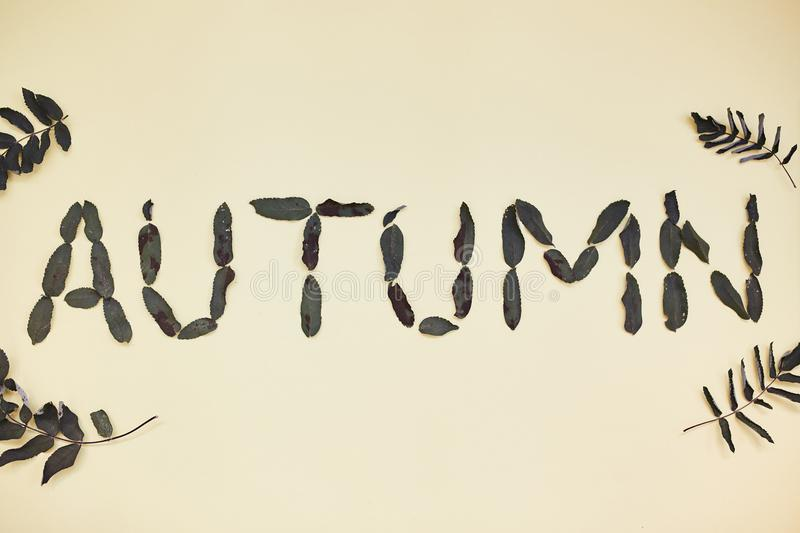 The Word Autumn. Composed of dry leaves. royalty free stock image