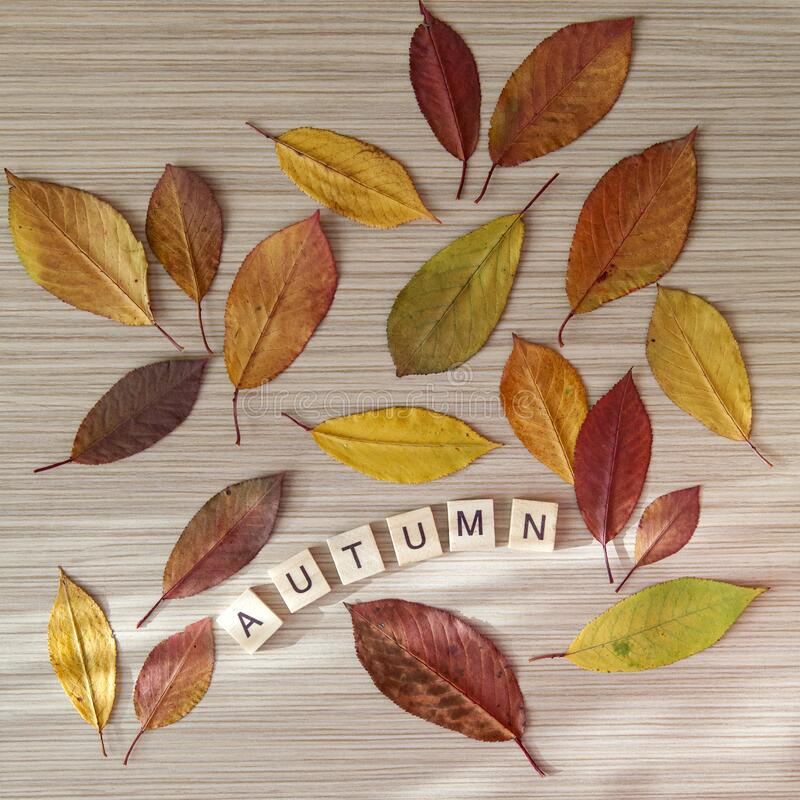 Word `autumn` made out from wooden letters with autumn leaves. Fall season concept, flatlay stock images