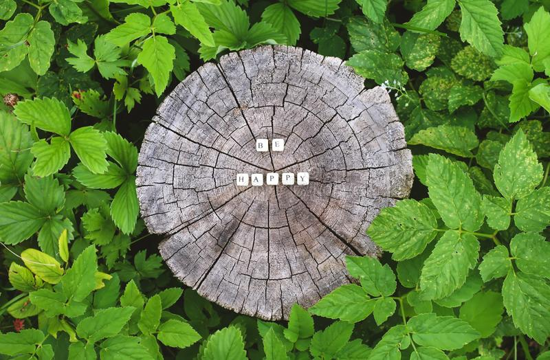 Word be happy of wooden beads on a tree stump surface in the forest. Word be happy of wooden alphabet beads on a tree stump surface in the forest stock photo