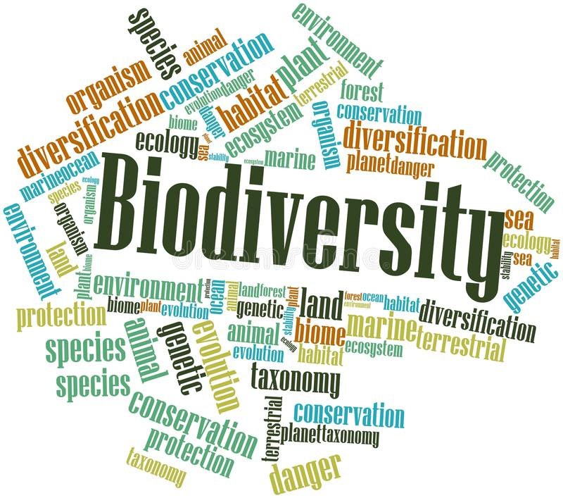 Word cloud for Biodiversity. Abstract word cloud for Biodiversity with related tags and terms royalty free illustration