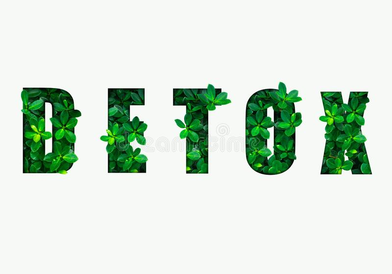 Word detox is made from green leaves. Concept of diet, cleansing the body, healthy eating, ditital detox vector illustration