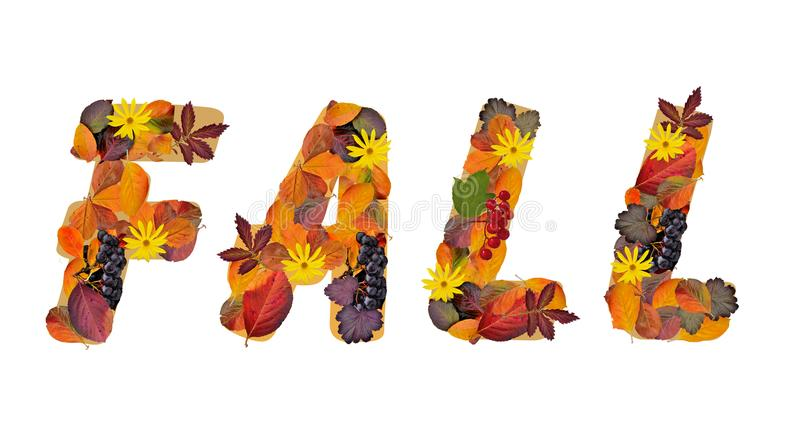 Word Fall composed from bright, colorful autumn leaves and berries stock illustration
