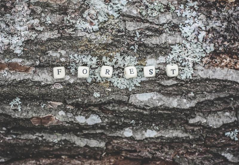 Word forest of wooden alphabet beads on a tree bark surface in the forest. Word forest of wooden alphabet beads on a tree bark rough surface in the forest royalty free stock images