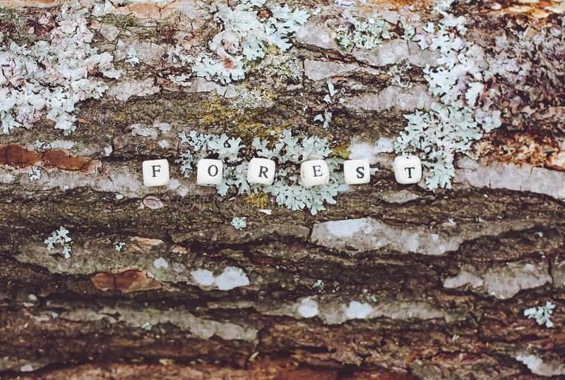 Word forest of wooden alphabet beads on a tree bark surface in the forest. Word forest of wooden alphabet beads on a tree bark rough surface in the forest stock photo